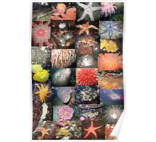 Pacific Northwest Marine Life Collage (portrait) Poster