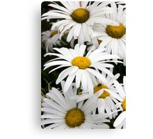wild Irish daisies Canvas Print