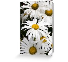 wild Irish daisies Greeting Card