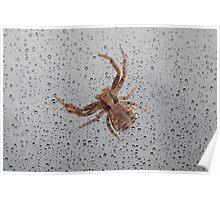 CRAB SPIDER. Poster