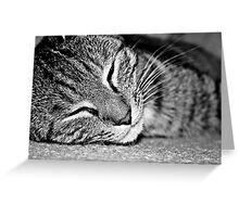 Kitten. Greeting Card