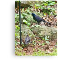 Male and Female Common Grackles Canvas Print