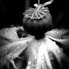 Poppy_5 by Hope Ledebur