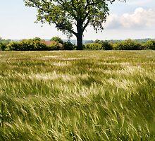 A moving sea of Barley by Richard Flint
