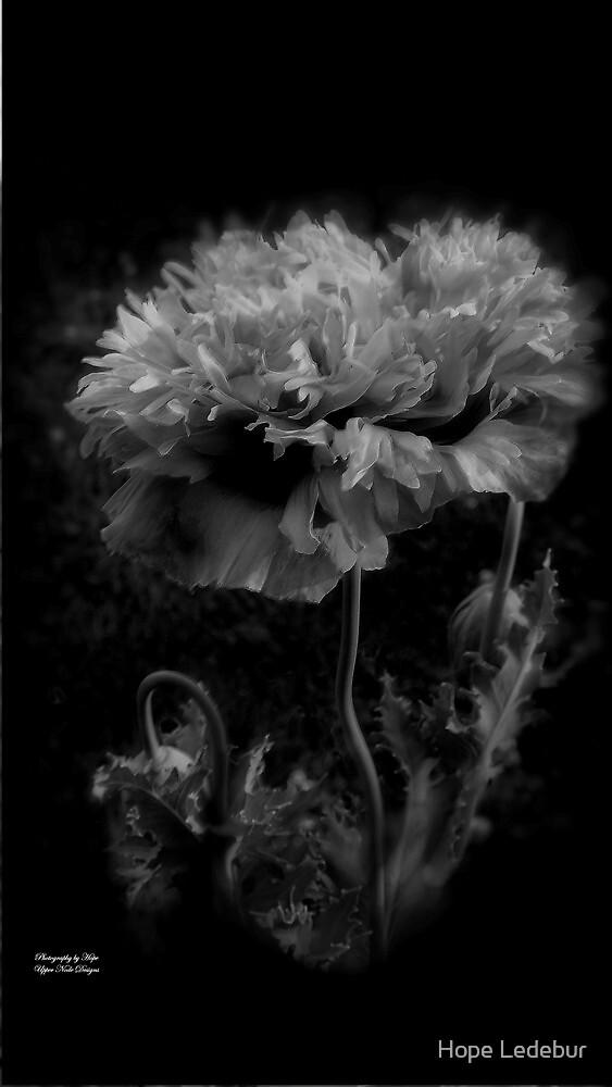 Poppy_3 by Hope Ledebur
