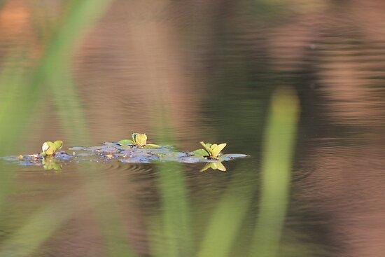 Reflecting by aprilann