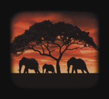 Elephant Sunset by Walter Colvin