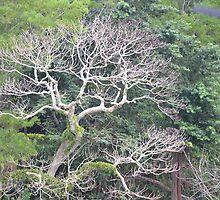 Vanuatu - tree by Dylan  Rackley