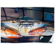 Crab... Poster
