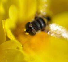 Bee... by crubino12