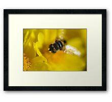 Bee... Framed Print