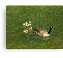 Following Mommy Canvas Print
