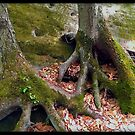 Beartown Rocks Roots by LocustFurnace