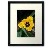 Satin Tulip Framed Print
