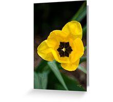 Satin Tulip Greeting Card