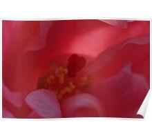flower... Poster
