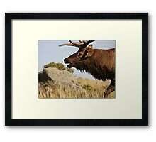 The Rut Framed Print