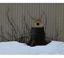 Icelandic Bird House Photographic Print