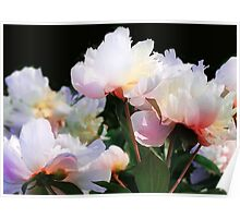 How Many Peonies in a Plethora? Poster