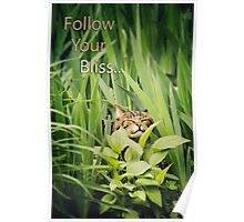 Follow Your Bliss... Poster