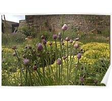 CHIVES AND MARJORAM - SECRET WALLED HERB GARDEN Poster