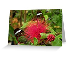 Four GlassWings (Please View large to see the FOUR) Greeting Card