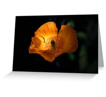 Poppy on Fire Greeting Card