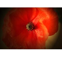 Flaming Red poppy Photographic Print