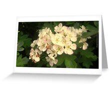 Hawthorn Blossom Greeting Card