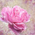 Roses are Pink by EvaMarIza