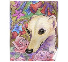 Shy flower whippet greyhound Poster