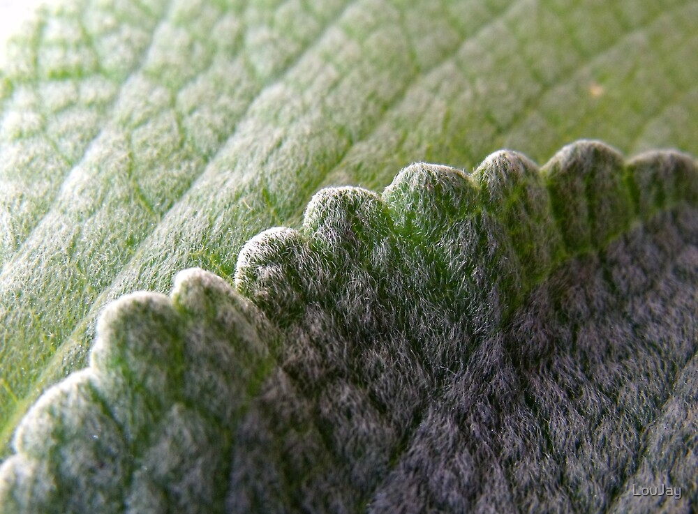 253/365 soft scalloped edges by LouJay