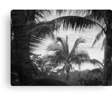 View Through The Palms I BW Canvas Print