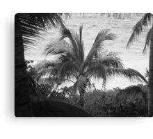 View Through The Palms II BW Canvas Print