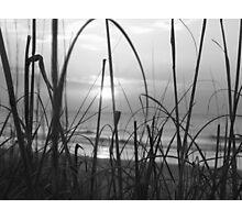Sea Grass BW Photographic Print