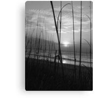 Sea Grass I BW Canvas Print