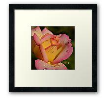 We all love you, Rose Framed Print