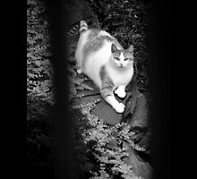 Felis Catus - Domestic Stray Cat In A Hidden Garden - Middle Island, New York by © Sophie W. Smith