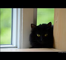 Felis Catus - Black Female Turkish Angora Cat Hiding Behind Bookshelves by © Sophie W. Smith