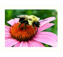 ~ Bumble Bee On A Cone Flower ~ Art Print
