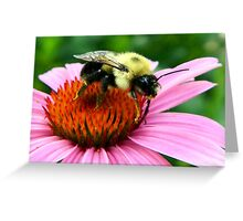 ~ Bumble Bee On A Cone Flower ~ Greeting Card