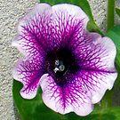 1595-beauty flower by elvira1