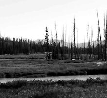 ~ Yellowstone National Park, Wyoming ~ by Brion Marcum