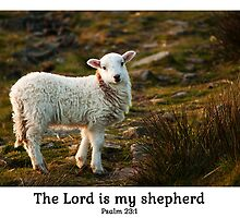 Lord Is My Shepherd (Caption) Psalm 23 by Andy Merrett