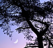 Touching The Moon by Salwa Afef