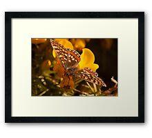 Marsh Fritillary Framed Print