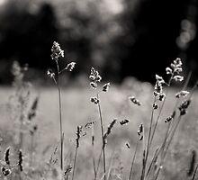 Summer Bliss  by Michael  Kemp