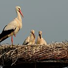 Stork Family by Peter Wiggerman