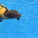 Swimming Dog by bethscherm