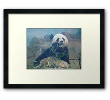 Panda Eating Framed Print